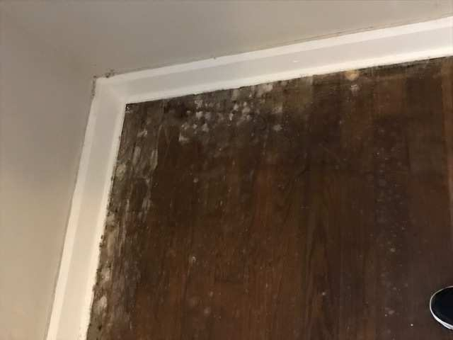 Cause Of Mold On Wood Floor