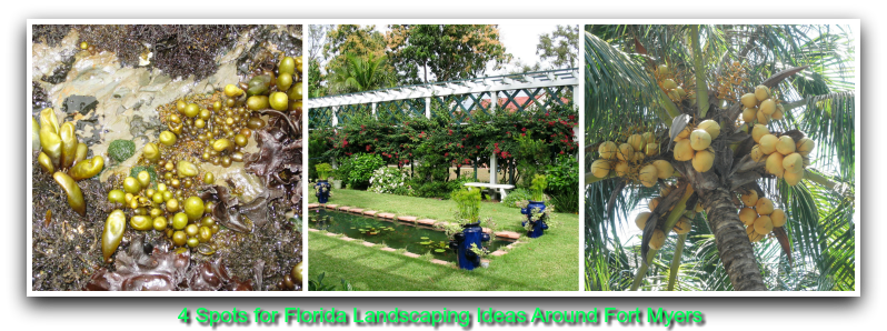 4 Spots for Florida Landscaping Ideas Around Fort Myers