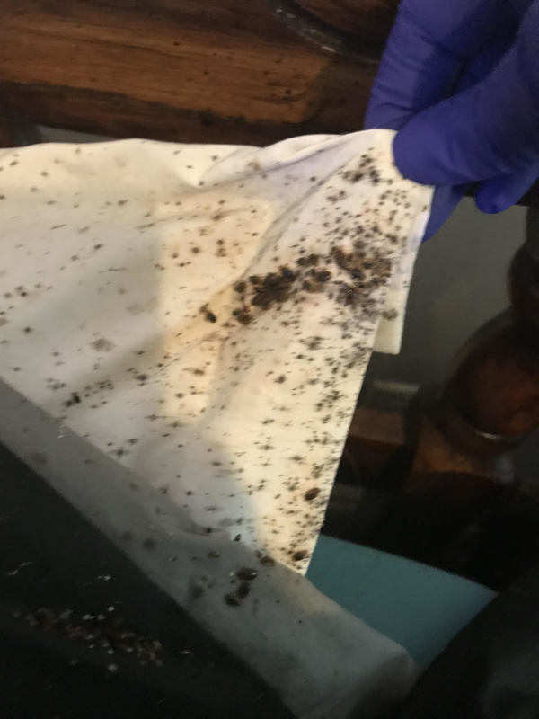 disgusting landlord finds bed bugs