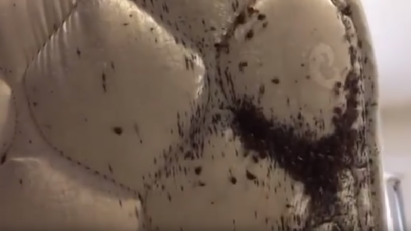 disgusting tenants bed bugs
