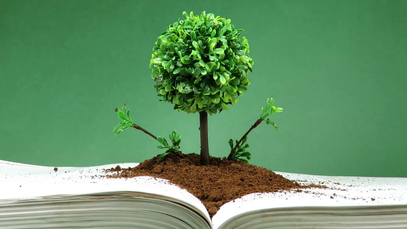Normal 1553812755 Videoblocks Miniature And Decorative Tree With Round Canopy On Layer Of Earth Placed On An Open Book Sprayed With Water Concept About Knowledge And Spiritual Evolution Houha Ngb Thumbnail Full01