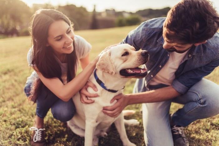 pet-service-animal