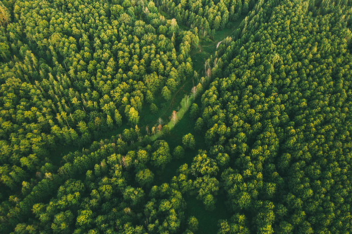 Aerial View Of Green Forest Landscape. Top View From High Attitude In Summer Evening. Small Marsh Bog In Coniferous Forest. Drone View. Bird's Eye View.