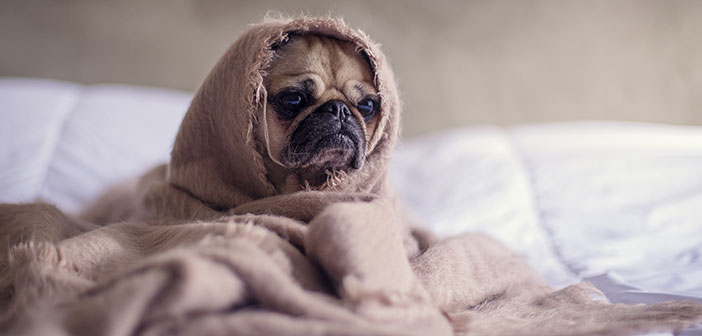 Emotional Support Animals: What's Legal for Tenants? | Real